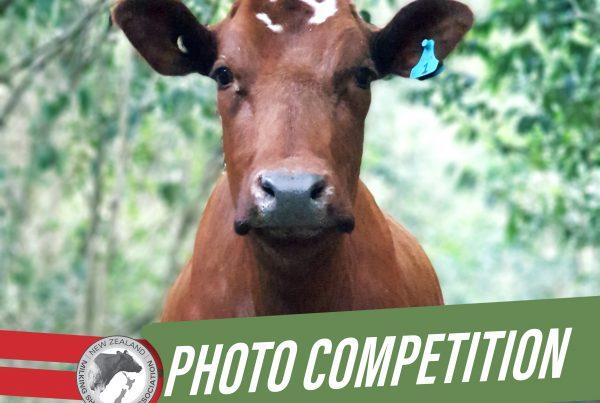 NZMSA Photo Competition
