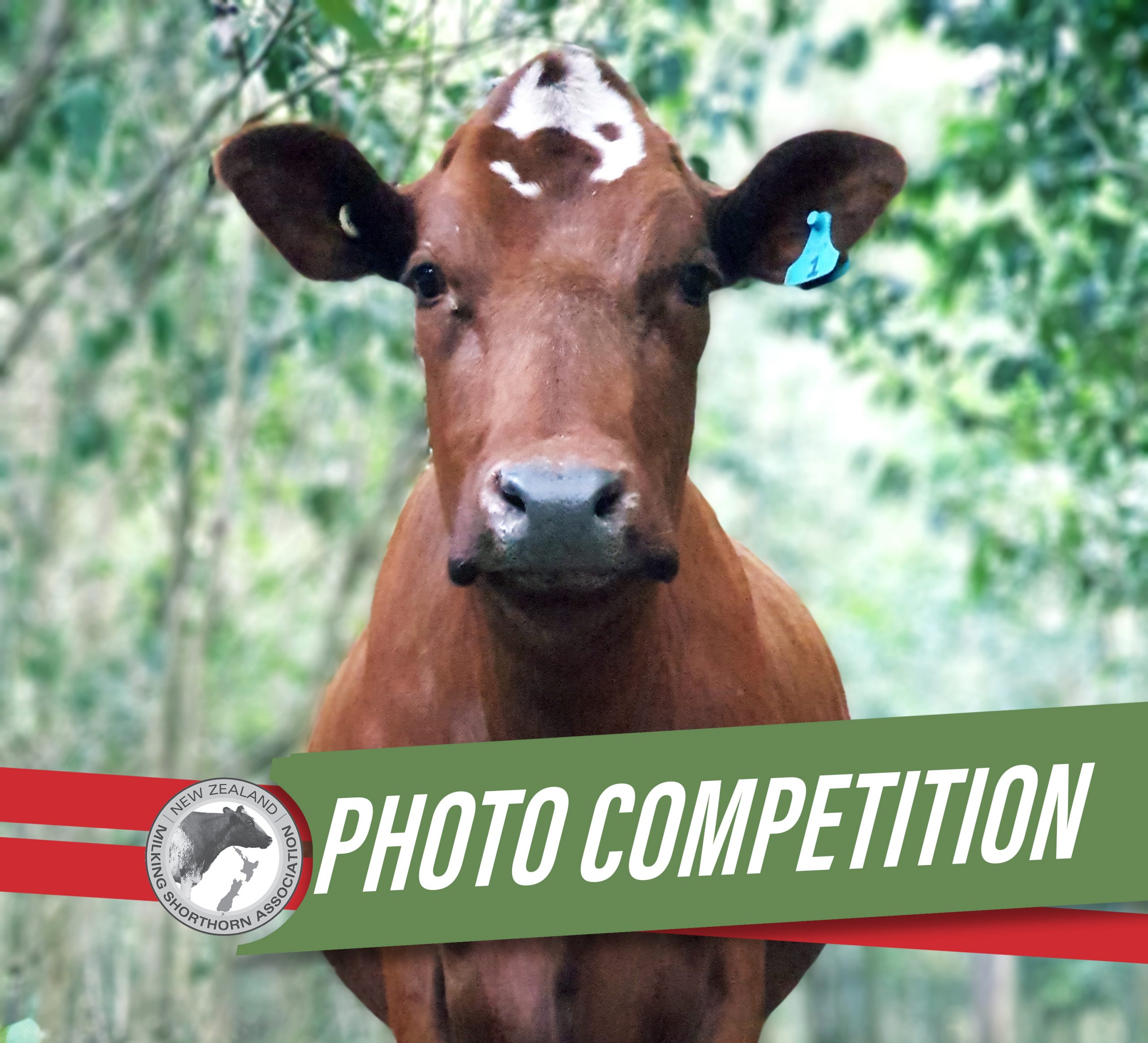 NZMSA Photo Competition